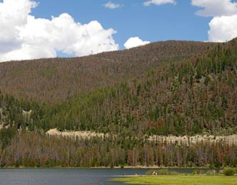 Forests in Colorado and Wyoming are devastated by pine beetle infestations, leading to massive amounts of dead, rotting wood (Photo taken in Colorado by Hustvedt)