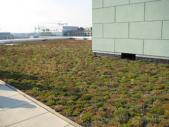 A green roof in Washington, D.C. (photo courtesy of the Chesapeake Bay Program)