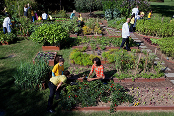 Urban Agriculture: Creating Healthy, Sustainable Communities in D.C.    Article   EESI